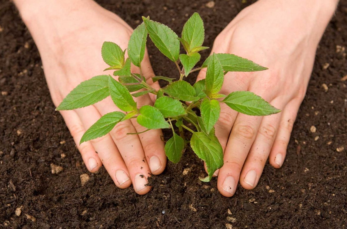 sustainability, environment, plant, plants, seedling